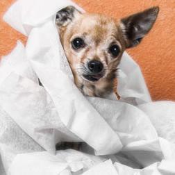 プロパリンシロップ通販価格は|犬猫用の尿漏れ・尿失禁 治療薬