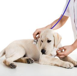 フォルテコール犬猫用 効果や副作用について!通販での値段・価格は?