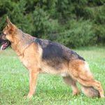 トロコキシル チュアブル|通販の価格・値段は?犬の関節炎・鎮痛剤