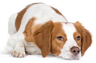 オンシオール犬用の副作用は?