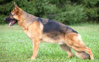 抗てんかん薬「ゾニサミド」で犬と共に治療を